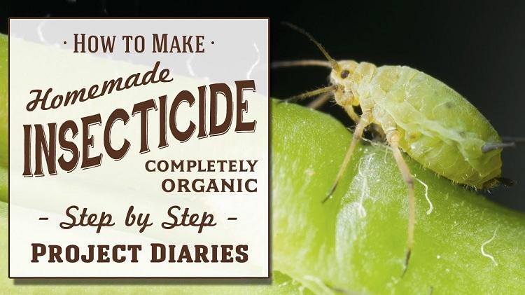 Thuốc diệt côn trùng tiếng anh là gì?