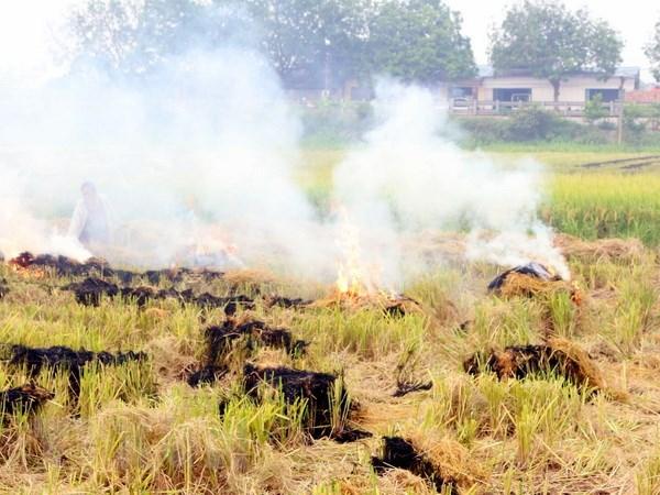 Đốt rơm rạ gây ô nhiễm môi trường
