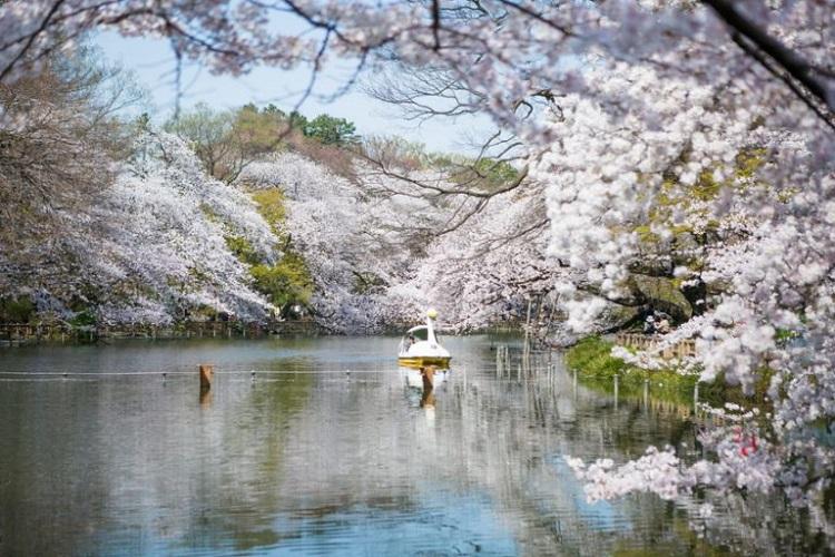 Công Viên Inokashira - nhữn điểm nổi tiếng ở Tokyo