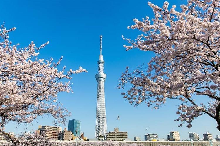 Tokyo Sky Tree - địa điểm nổi tiếng ở Nhật Bản